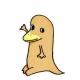Wild_platypus